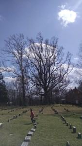 Guardian trees
